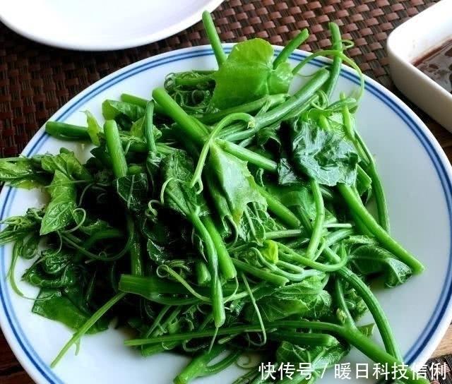 不腻 夏季吃这菜,一斤2块钱,百吃不腻,清肠又排毒,腰细了,腿瘦了
